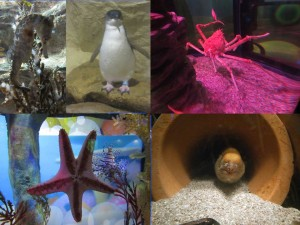 sea-life_aquarium
