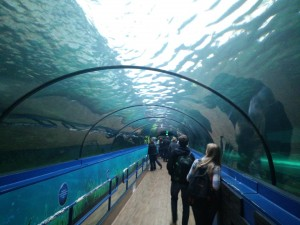 sea-life_tunnel