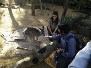 wild-life_kangourou2